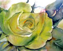 Gelbe Rose (Aquarell)