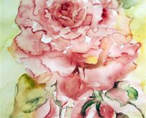 Rosa Rose (Aquarell)
