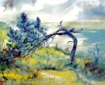 Hiddensee - Windflüchter (Aquarell)