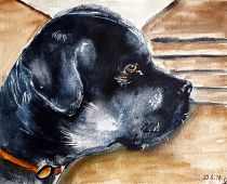 Bruno (Aquarell)
